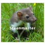Boek_steenmarter