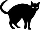 steenmarter kat